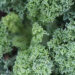 Moja droga do diety (prawie) roślinnej